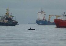 wpid-canoe-vs-ships.jpg